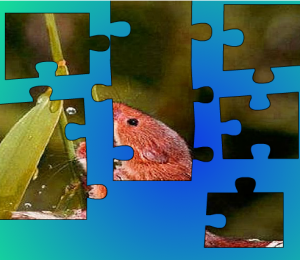 cute-and-funny-animals-puzzle
