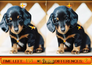 differences-in-puppy-land